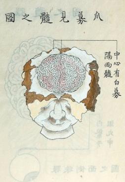 Shinnin Kawaguchi_brain
